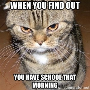angry cat 2 - When you find out you have school that morning