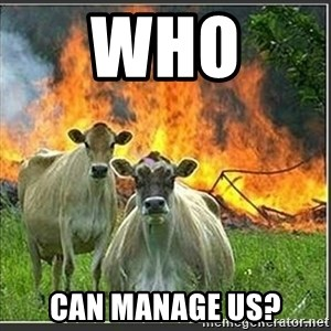 Evil Cows - Who  can manage us?