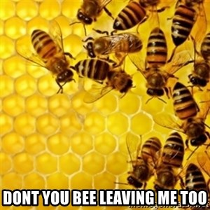 Honeybees - dont you bee leaving me too