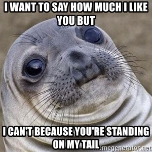 Awkward Seal - I want to say how much I like you but I can't because you're standing on my tail