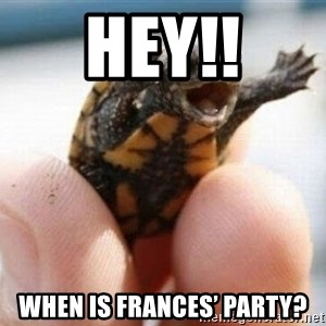 angry turtle - HEY!! When is Frances' party?