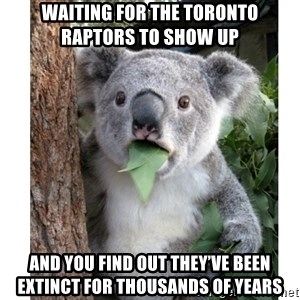 surprised koala - Waiting for the Toronto Raptors to show up  And you find out they've been extinct for thousands of years
