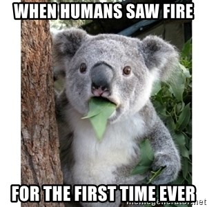 surprised koala - When Humans saw fire  for the first time ever