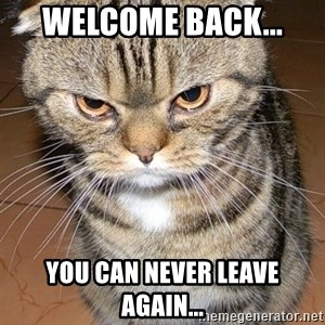 angry cat 2 - Welcome back... You can never leave again...