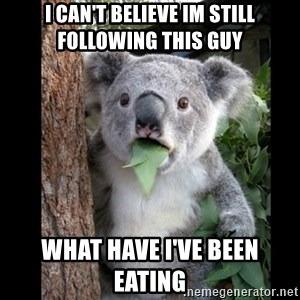 Koala can't believe it - I can't believe im still following this guy What have I've been eating