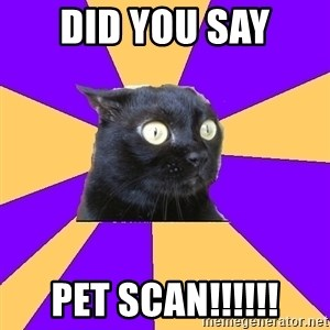 Anxiety Cat - Did you say pet Scan!!!!!!