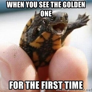 angry turtle - When you see the golden one For the first time