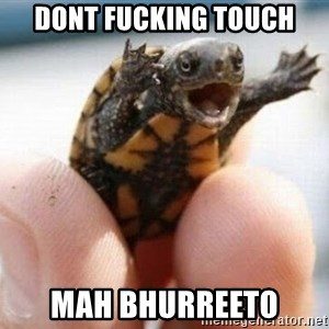 angry turtle - Dont fucking touch mah bhurreeto