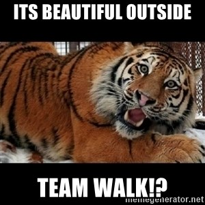 Sarcasm Tiger - Its beautiful outside Team walk!?