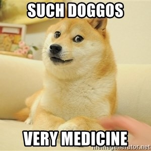 so doge - Such doggos Very medicine