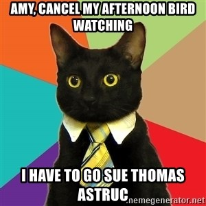 Business Cat - Amy, cancel my afternoon bird watching I have to go sue Thomas Astruc