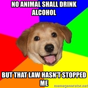 Advice Dog - No animal shall drink alcohol but that law hasn't stopped me