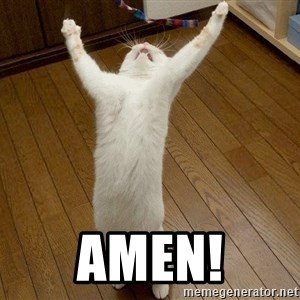 praise the lord cat - AMEN!
