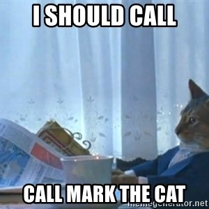 newspaper cat realization - I SHOULD CALL call mark the cat