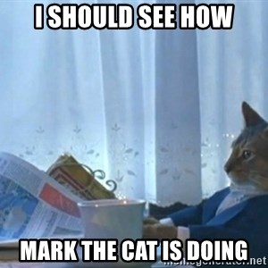 newspaper cat realization - I SHOULD SEE HOW MARK THE CAT IS DOING