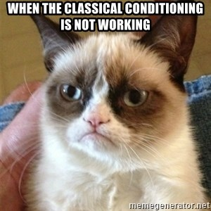 Grumpy Cat  - When the classical conditioning is not working