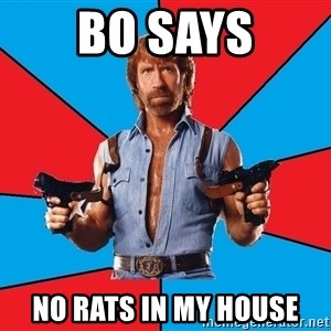 Chuck Norris  - Bo says No rats in my house