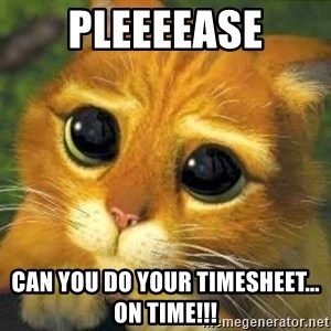 Shrek cat 2 - Pleeeease Can you do your timesheet... on time!!!