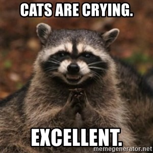 evil raccoon - Cats are crying. Excellent.