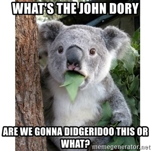 surprised koala - What's the John Dory Are we gonna Didgeridoo this or what?