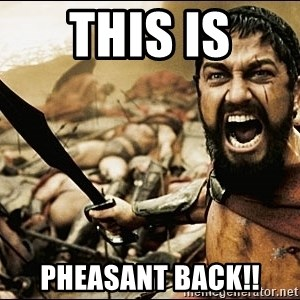 This Is Sparta Meme - this is pheasant back!!