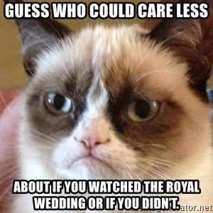 Angry Cat Meme - Guess who could care less About if you watched the Royal Wedding or if you didn't.