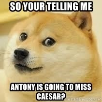 dogeee - So your telling me Antony is Going to Miss Caesar?