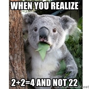 surprised koala - when you realize  2+2=4 and not 22