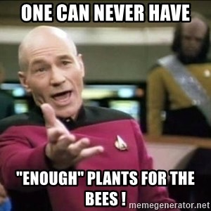 """Why the fuck - One can never have """"enough"""" plants for the bees !"""