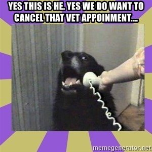 Yes, this is dog! - yes this is he. yes we do want to cancel that vet appoinment....