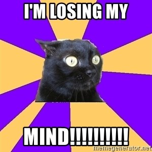 Anxiety Cat - i'm losing my mind!!!!!!!!!!