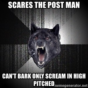 Insanity Wolf - Scares the post man Can't bark only scream in high pitched