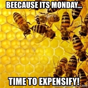 Honeybees - Beecause its Monday... Time to Expensify!