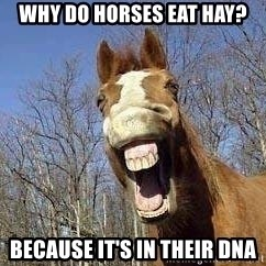 Horse - Why Do Horses Eat Hay? Because it's in their dna