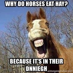 Horse - why do horses eat hay? because it's in their dnniegh
