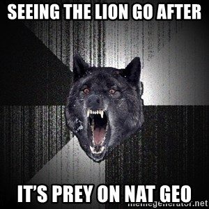 Insanity Wolf - Seeing the lion go after  It's prey on nat geo