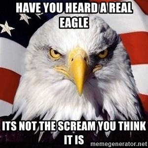 American Pride Eagle - have you heard a real eagle  its not the scream you think it is