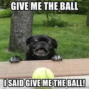 Ermahgerd Pug - give me the ball I SAID GIVE ME THE BALL!
