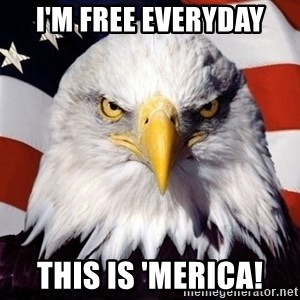 American Pride Eagle - I'm Free everyday this is 'MERICA!