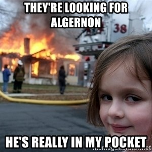 Disaster Girl - They're looking for Algernon He's really in my pocket