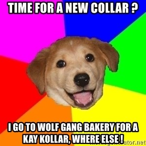Advice Dog - Time for a new collar ? I go to wolf gang Bakery for a kay kollar, where else !