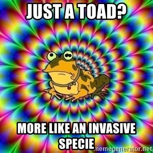 hypno toad - Just a Toad? More like an Invasive Specie