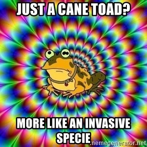 hypno toad - Just a Cane Toad? More like an invasive Specie