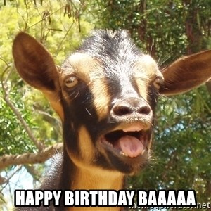 Illogical Goat - Happy birthday BAAAAA