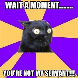 Anxiety Cat - Wait a moment......... You're not my servant!!!