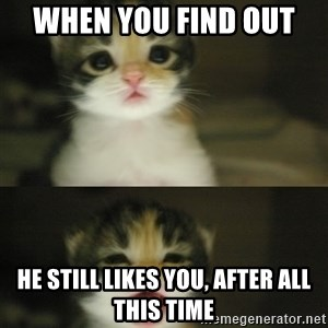 Adorable Kitten - when you find out  he still likes you, after all this time