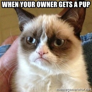 Grumpy Cat  - When your owner gets a PUP