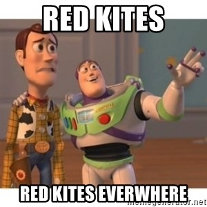 Toy story - Red Kites Red Kites everwhere