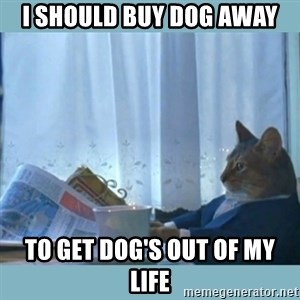 rich cat  - i should buy dog away to get dog's out of my life