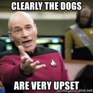 Why the fuck - Clearly the dogs  are very upset